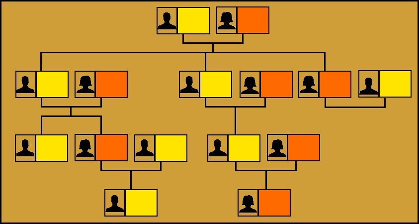 Image of a Family Tree.
